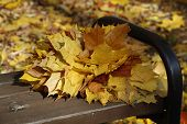 A Bouquet Of Yellow, Orange, Red Maple Leaves Lies On A Bench In The Forest. poster