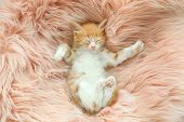 Cute Little Kitten Sleeping On Pink Furry Blanket, Top View poster