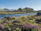 Beautiful Icelandic Landscape With Wild Pink Flowers, Blue Glacier River And Green Mountains. Blue S poster