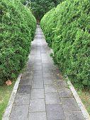 The empty flagstones walkway with Coniferous shrub around in the park,Fuzhou,Fujian,China poster
