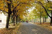 Autumn In Nis, Serbia. Yellow Colors In The Old Nis Fortress. People Are Walking In A Nice Autumn Da poster