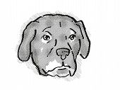 Retro Cartoon Style Drawing Of Head Of An Afador Or Afghan Lab, A Domestic Dog Or Canine Breed On Is poster