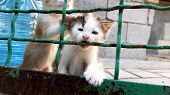 Little Kittens Are Played With The Old Mesh Fence, White Kitty Bite Rusty Metal. poster