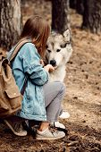 Woman Feeding Her Dog. Young Girl With Her Dog, Alaskan Malamute, Outdoor At Autumn. Domestic Pet poster