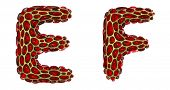 Realistic 3D letters set E, F made of gold shining metal letters. Collection of gold shining metalli poster