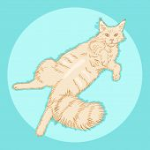 Cute Furry Lying Maine Coon Cat, Beautiful Wooly Isolated Pet, For Cards, Prints, Banners Or Veterin poster