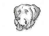 Retro Cartoon Style Drawing Of Head Of An  Aussiedoodle , A Domestic Dog Or Canine Breed On Isolated poster
