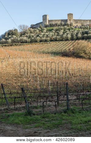 Vineyards In Winter Close To Monteriggioni, Tuscany, Italy