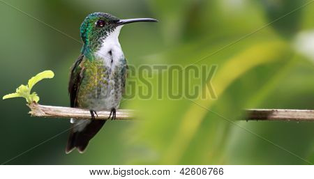 Little hummingbird with copy space