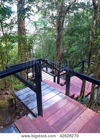 Boardwalk In Deep Forest