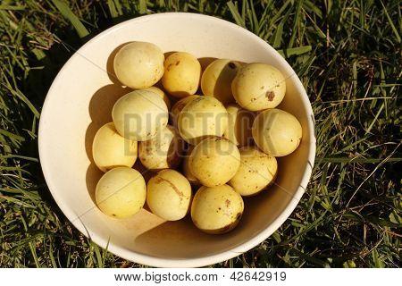 Marula Fruits