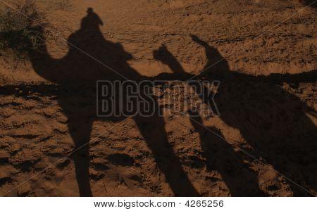 Camel Safari Shadows
