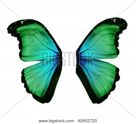 Wings Of Morpho Green Butterfly , Isolated On White
