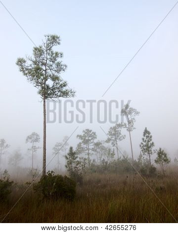 Early morning fog landscape