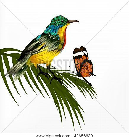 Cute Background With Vector Realistic Detailed  Tropical Bird And Butterfly
