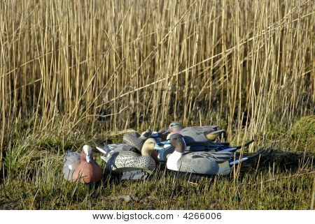 Duck Hunting Decoys