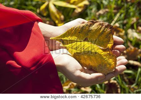 Woman hands with autumn leaves