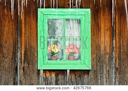 Flowers seen through a wooden window of an old house