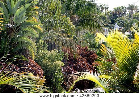 Tropical plants in Siam waterpark