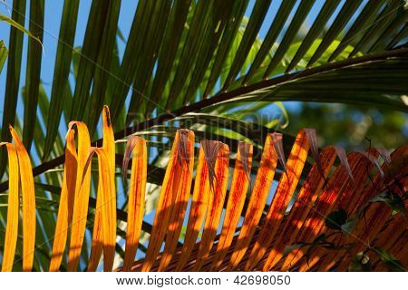 Golden evening light on palm leaf