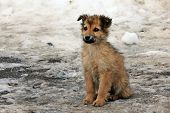 stock photo of tramp  - Little homeless puppy left in the snow - JPG