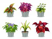 foto of six-petaled  - Illustration of six different plants on a white background - JPG