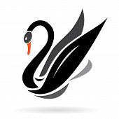 pic of black swan  - Vector image of swans on a white background - JPG