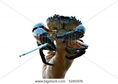 Smoking Crab
