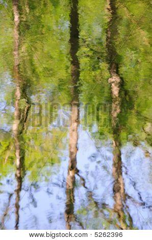 Bosque pintado por el agua