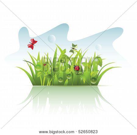 Grass with Ladybug