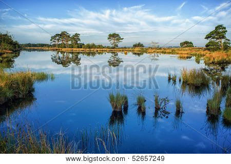 Reflections On A Calm Swamp Lake