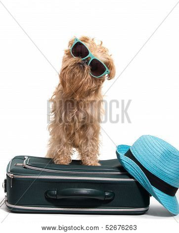 Vacation For Dog
