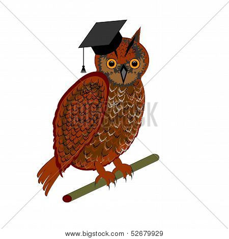 An Owl Wearing A Graduation Cap