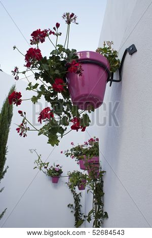 Plant Pots In Wall