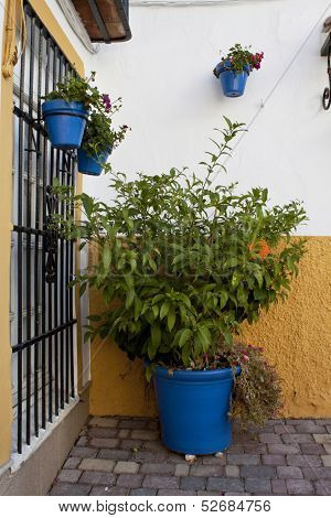 Place With Plant Pot