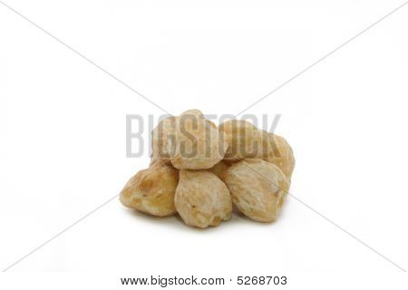 Candlenut