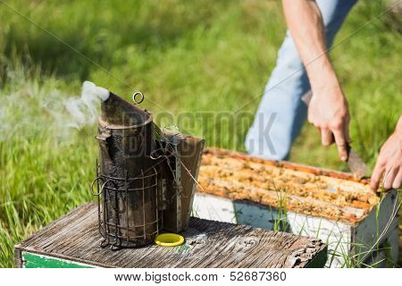 Bee smoker with apiarist working in his apiary on farm