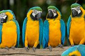 picture of green-winged macaw  - parrot bird sitting on the perch - JPG