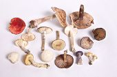 Wild Mushroom Collection