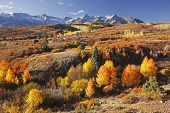 image of mear  - Dallas Divide Uncompahgre National Forest Colorado USA - JPG