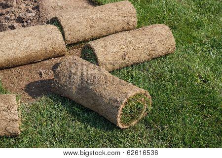 Roll Grass