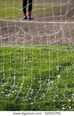 Daisies Behind The Goal Net