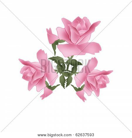 Branch Of Pink Roses On White
