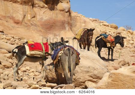 Donkeys Rural Life