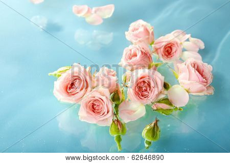 Floating pink roses close up