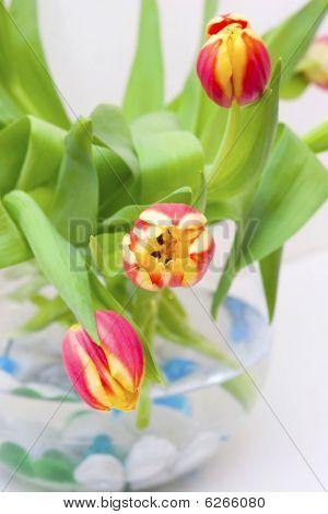 Tulips in the vase