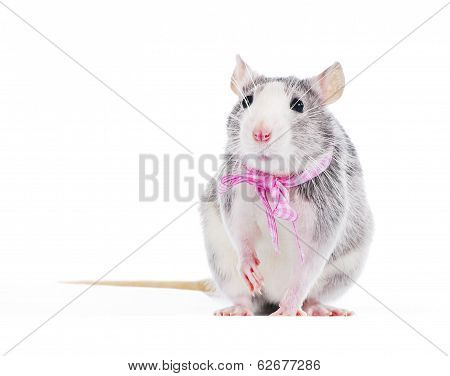 Funny decorative rat with pink bow