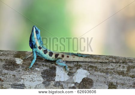 Blue Lizard Looks Like Small Reptile With Nice Details On Its Painted Body
