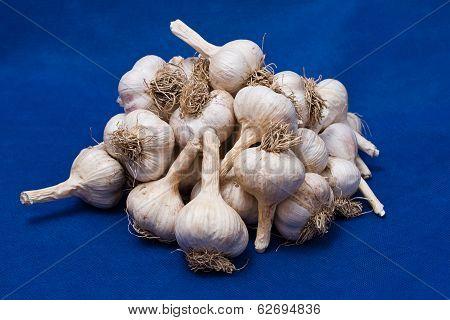 Bunch Of Garlic