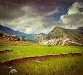 Vintage retro hipster style travel image of rice field terraces (rice paddy) with grunge texture ove